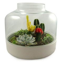 Colorful cacti and succulents are awesome for flashy terrariums- with white rocks on the top or other colored stones it can be a really cool effect
