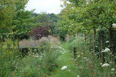 Wild bloemenmengsel met graspad en hagen