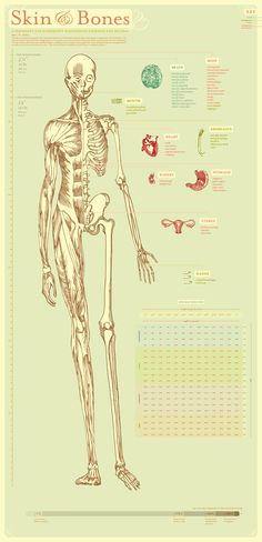 I want lots of old medical diagrams to hang all over the house.
