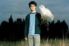 Movie - Harry Potter - Daniel Radcliff - Hermione Granger - Emma Watson - Voldemort