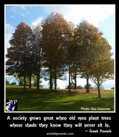 World of Proverbs: A society grows great when old men plant trees whose shade they know they shall never sit in. ~ Greek Proverb [15428] worldofproverbs.com
