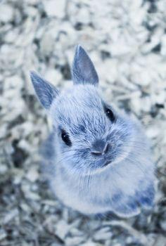 He looks like the Blue Bunny ice cream bunny!
