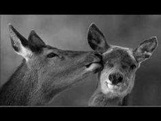 ELLI  PASPALA - Αν η Αγάπη