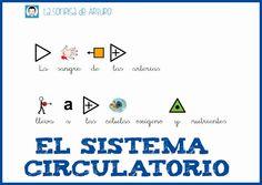 Fichas sobre el sistema circulatorio.Fichas sobre el sistema circulatorio. Health Care, Spanish, Map, Children With Autism, Circulatory System, Reading Comprehension, Human Body, Note Cards, Learning