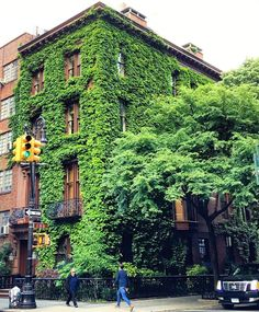 Sweet dreams of ivy-covered sanctuaries in the middle of New York City.  @jane_lilly by anthropologie