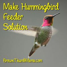 Make Hummingbird Feeder Solution. I make this all the time. Don't buy the coloured expensive hummingbird feed from stores.