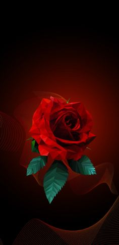 hd rose wallpapers for mobile wallpaperpulse android pinterest
