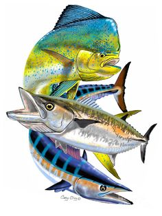 Mahi Wahoo Kingfish Photograph by Carey Chen