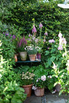 A beautiful garden tableau:-)