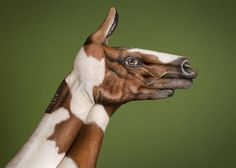 Horse Dappled Handpainting by Guido Daniele