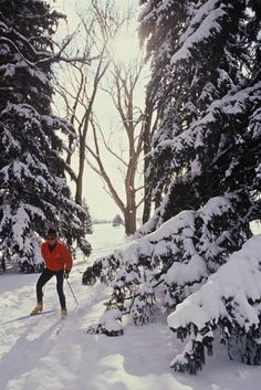 Cross-Country Skiing in Fort Collins Natural Area