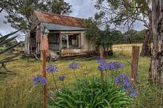 The blue flowers are the only remaining sign of life in this old and forgotten place. Neat picture!