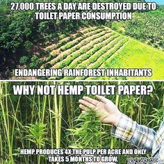Trees mature in 50-100 years. Hemp matures in a little as 100 days.