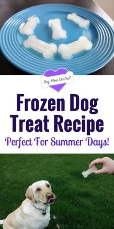 Keep your dog hydrated with these super simple frozen dog treats! This is seriously the easiest homemade dog treat recipe ever.