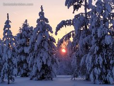 Árvores repletas de neve na Lapónia na Finlândia