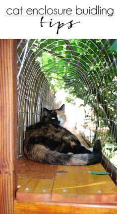 How To Build A Cat Enclosure Cat Enclosure Building Tips Cat Cat Tunnels Along Fence Keeping Your Outdoor Cat Enclosure Cat Enclosure Diy Cat Enclosure