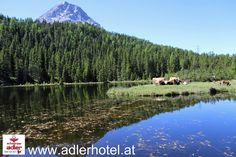 Eindrucksvolle Naturlandschaft Mount Rainier, Mountains, Nature, Travel, Eagle, Hiking, Vacation, Naturaleza, Viajes
