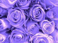 Purple Passion Fine Art Print