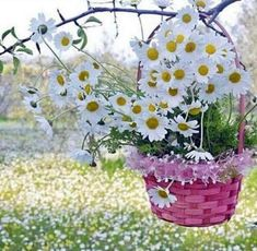 Sweet and pretty! Flower Basket, My Flower, Flower Power, Daisy Love, Daisy Girl, Sunflowers And Daisies, Flower Fashion, Ikebana, Daffodils