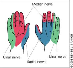 Neurological Assessment of the Distal Upper Extremity Median Nerve -Sensory: innervation is purest on the volar skin of the tip of the index finger -Motor: ask pt. to touch the thumb to the fifth finger Ulnar Nerve -Sensory: innervation is purest o Ulnar Nerve, Peripheral Nerve, Muscle Anatomy, Body Anatomy, Radial Nerve, Human Anatomy And Physiology, Medical Anatomy, Physical Therapist, Medical Information