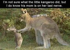 Yes. The little one is definitely getting its last warning before it gets send to its room in the pouch of its mother's belly.