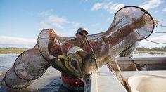 Ловля рыбы мережей (вентерем)