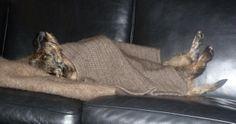 Luksusdyr svøbt i tæppe af moskusuld