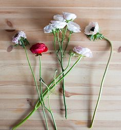 Design*Sponge, scabiosa, red ranunculus, spray rose, blush ranunculus, anemone.