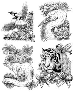 Creative Haven Wild Animal Portraits Coloring Book PAGE 3 Welcome To Dover Publications