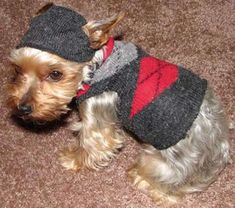 Dog sweater out of your old sock or shirt. Also a DIY coat.DIY Dog sweater out of your old sock or shirt. Also a DIY coat. Yorkshire Terrier, Italian Greyhound Rescue, Small Dog Sweaters, Puppy Sweaters, Dog Socks, Dog Clothes Patterns, Coat Patterns, Puppy Clothes, Dog Care