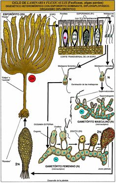71 Ideas De Botánica Botanica Biología Ciclos De Vida