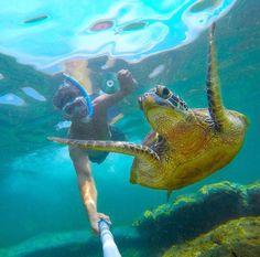 Man and his turtle! #selfie #animals #diving