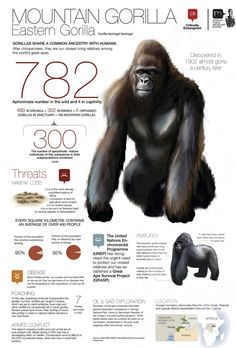 Gorilla Gorilla, Gorilla Craft, Silverback Gorilla, Gorilla Trekking, Mountain Gorilla, Types Of Animals, Most Beautiful Animals, Thinking Day, Animal Facts