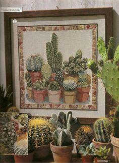 Suculentas, Cactos, Jardim de Baixo Custo, Sustentável e Plantas Tolerantes a Seca.  Criado para compartilhar, conhecimento e experiências.