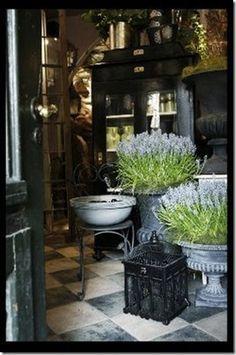 pretty garden shop