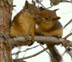 Shquirrel kisshes!