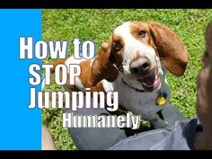 How to Teach Your Dog to Stop Jumping: Training Tips Tuesday | TruDog®