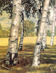 I love silver birch trees. They look beautiful no matter what way they are painted; This is a very peaceful painting. Oil Painting American Artist Luigi Lucioni, Modern art, still life paintings, American artists Land Art, Landscape Art, Landscape Paintings, Wow Art, Art Moderne, Tree Art, American Artists, Art History, Amazing Art