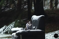 Photo shoot of a Boston Terrier in snow. Belgium