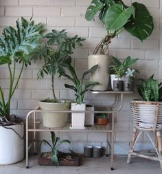 home Decore: Plant and cacti