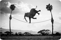 Thomas Subtil - Hakuna Matata - Safari Kenya 3