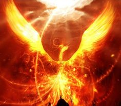 The Phoenix! From the ashes we live again! The phoenix is and has always been my number one Inspiration! Its a powerful and awe inspiring creature that would give anyone reason to get up when you are down, rebuild, and live again! Phoenix Wallpaper, Bird Wallpaper, Wallpaper Backgrounds, Phoenix Artwork, Wallpaper Desktop, Flaming Dragon, Fire Dragon, Dragon Art, 3d Fantasy