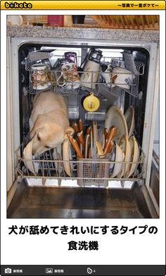 犬が舐めてきれいにするタイプの食洗機