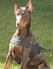 All Weather Nylon dog harness for tracking / walking Designed to fit Doberman