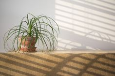 How to Kill the Little White Worms in Houseplant Pots   Hunker