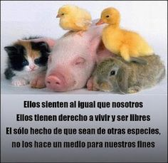 Cocina – Recetas y Consejos Amor Animal, Mundo Animal, Animals And Pets, Baby Animals, Cute Animals, Miss My Best Friend, Stop Animal Cruelty, Little Critter, Animal Rights