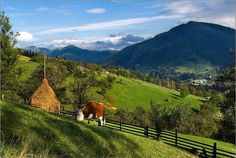 Carpathian Mountains, Ukraine. Ukraine, Romania People, Carpathian Mountains, Heart Of Europe, Top Destinations, Eastern Europe, Beautiful Landscapes, Beautiful Places, Places To Visit