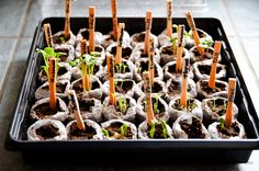 Start With Seeds and Save Money on Vegetable and Herb Plants Herb Plants, Seed Starting, Planting Seeds, Saving Money, Food And Drink