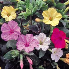 Shop online for flower seeds, including heirloom varieties and classic favorites. Our wide selection of flower seed packets includes annuals and perennials.