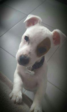Ma chien